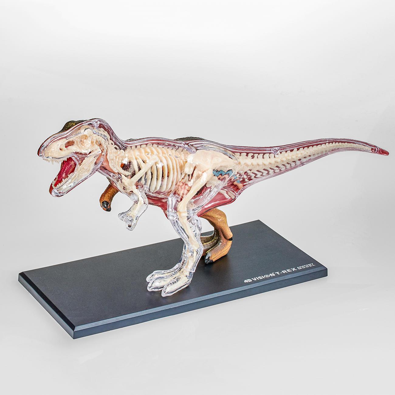 3D-Anatomie-Puzzle - T-Rex