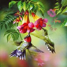Puzzle - Kolibri Ein Spass für die ganze Familie – spannend und entspannend zugleich.